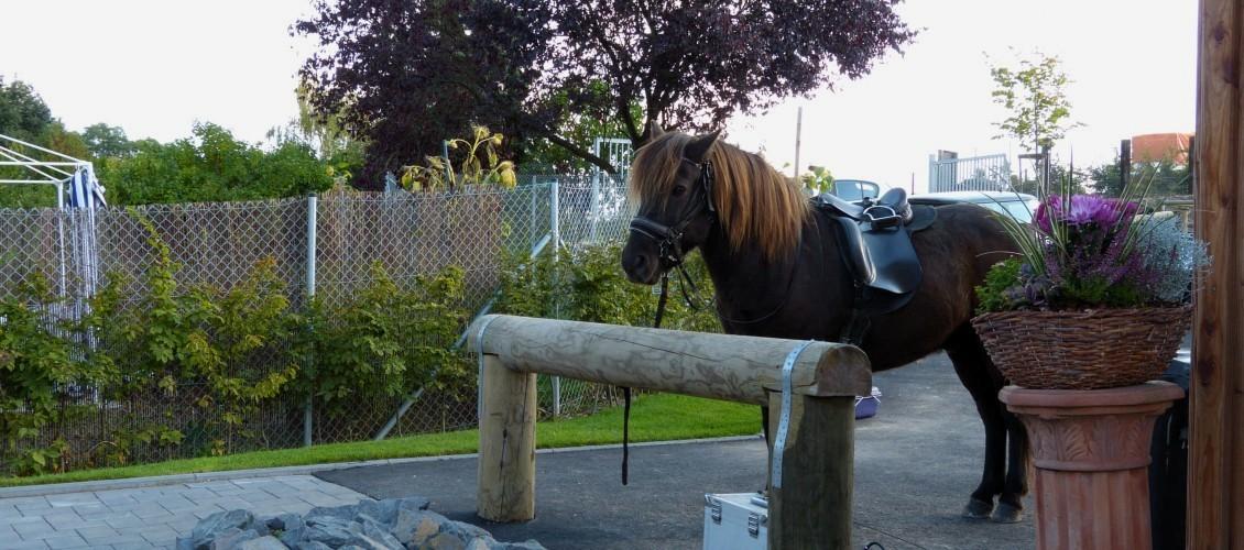 Pferd am Anbindebalken schaut in Blickrichtung des Betrachters; Foto: Julian Meurer
